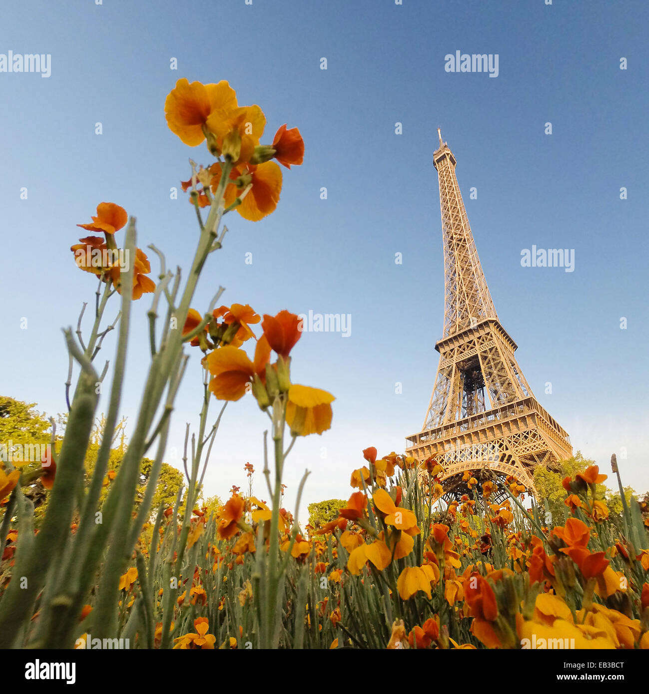 La Tour Eiffel vu par les fleurs, Paris, France Photo Stock