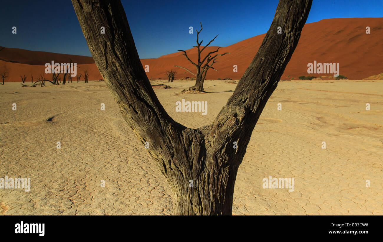 La Namibie, Naukluft National Park, vue de Dead Vlei Photo Stock