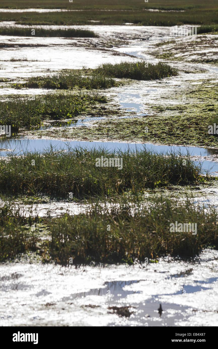 Roseaux en vasières à marée basse créant une forte tendance contraste Banque D'Images
