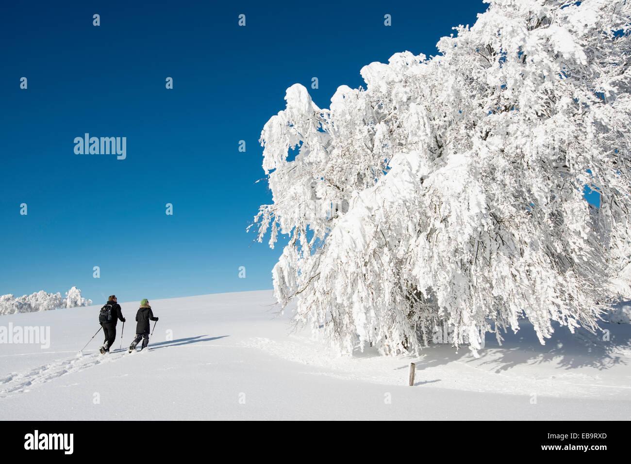 La neige a couvert de hêtres et de randonneurs en raquettes, Schauinsland, Freiburg im Breisgau, Bade-Wurtemberg, Photo Stock