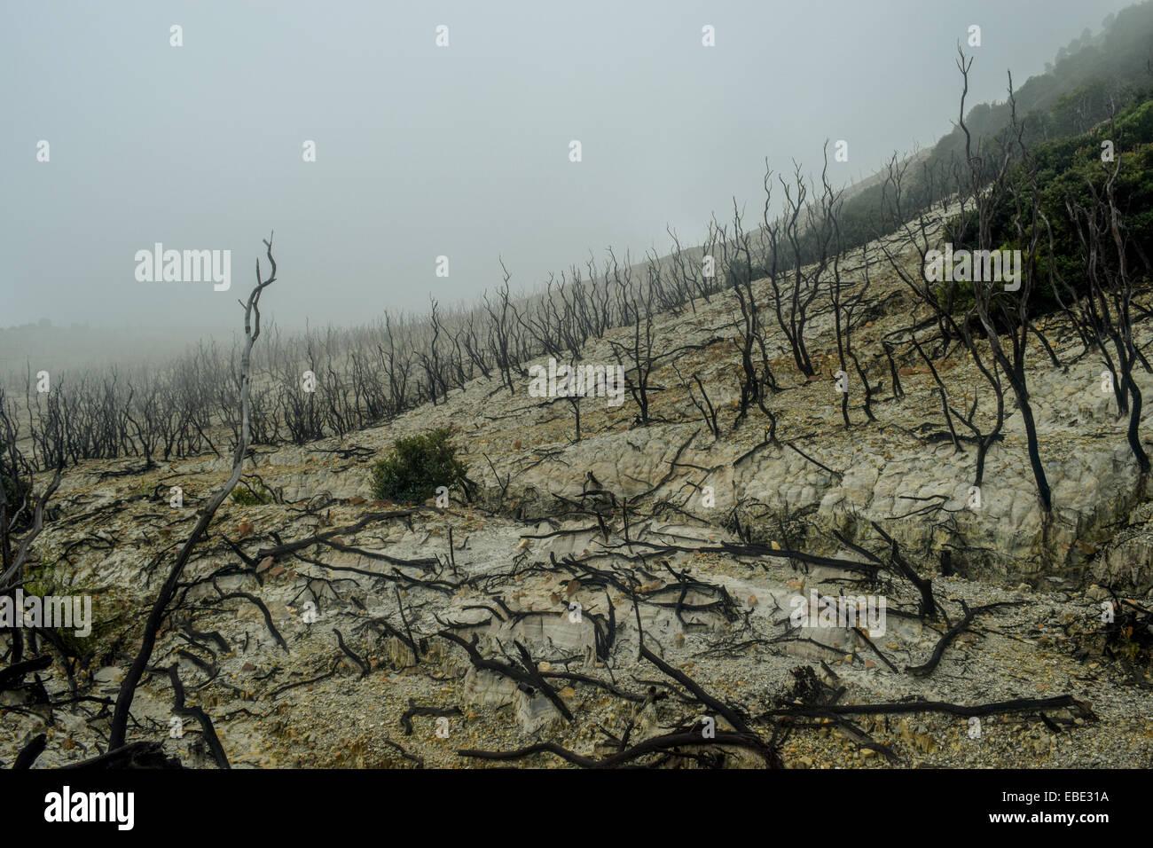 Arbres morts près du cratère du Mont Papandayan, Indonésie. Photo Stock