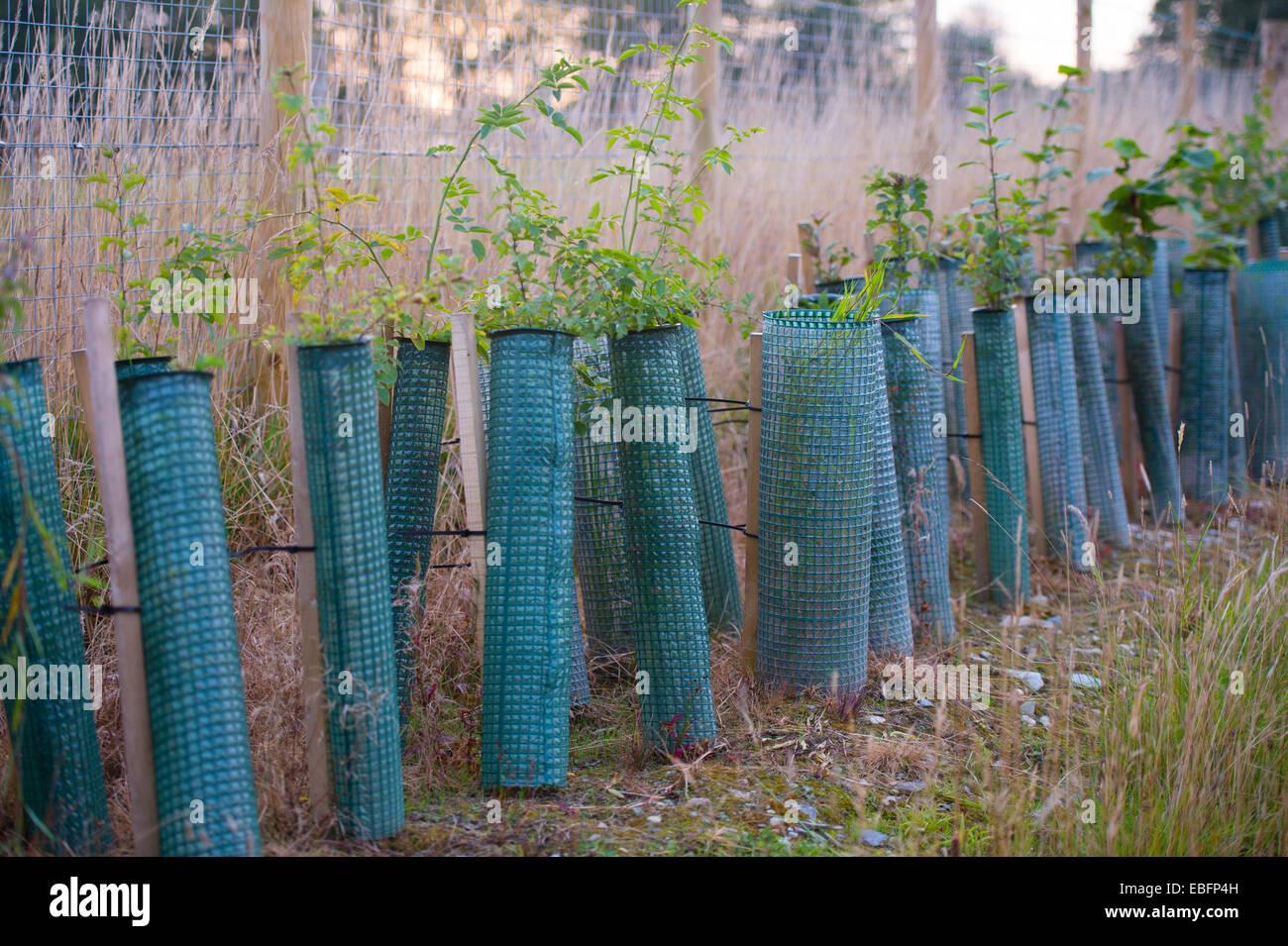 Arbre Fruitier D Intérieur une rangée de jeunes plants d'arbres fruitiers plantés à l