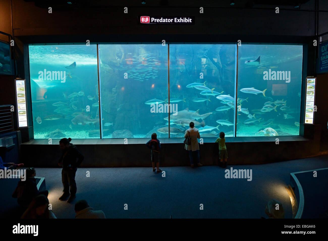 L'Aquarium des deux océans, vue de l'intérieur, Cape Town, Western Cape, Afrique du Sud Photo Stock