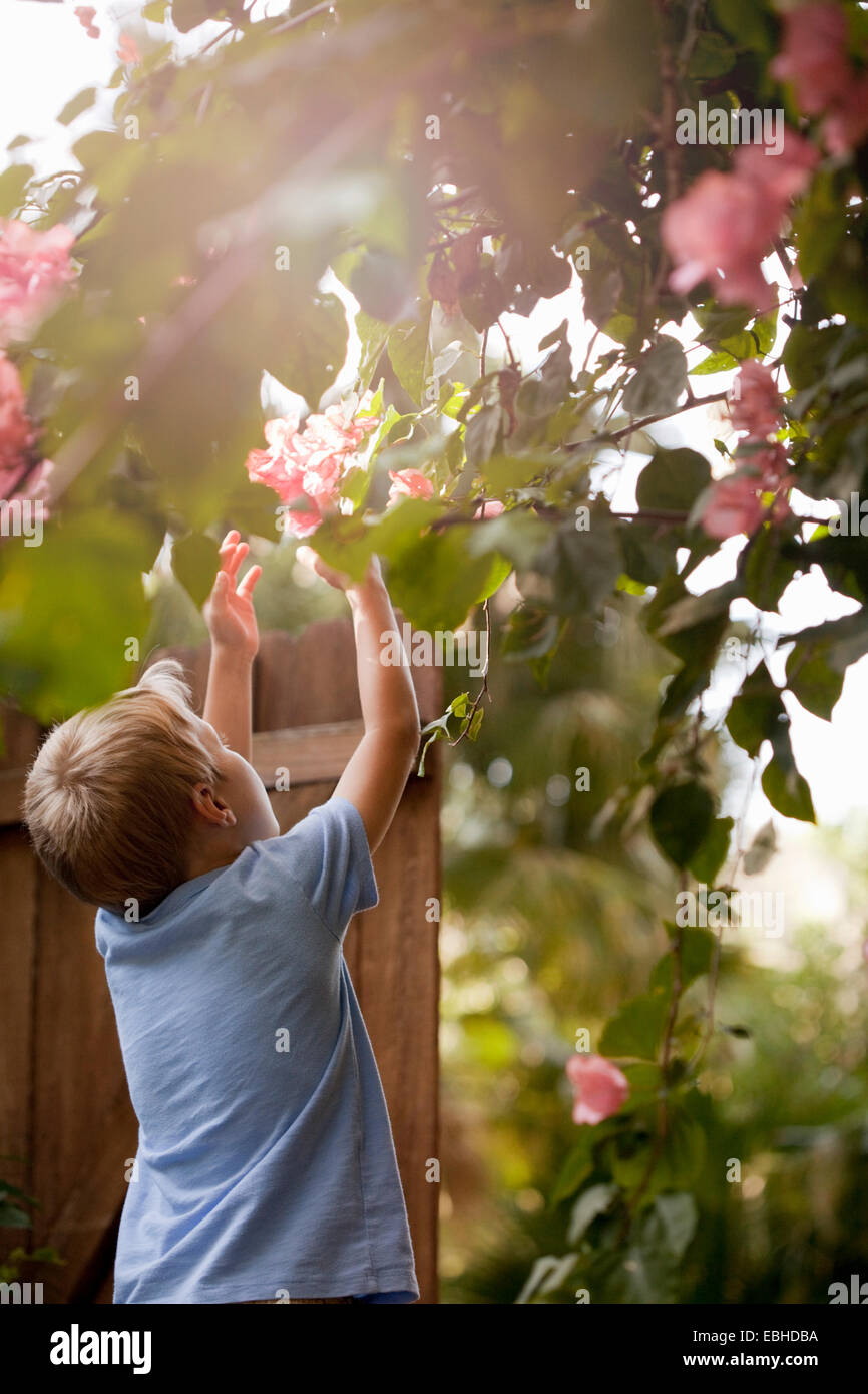 Jeune garçon en jardin, atteignant jusqu'à toucher les fleurs, vue arrière Photo Stock