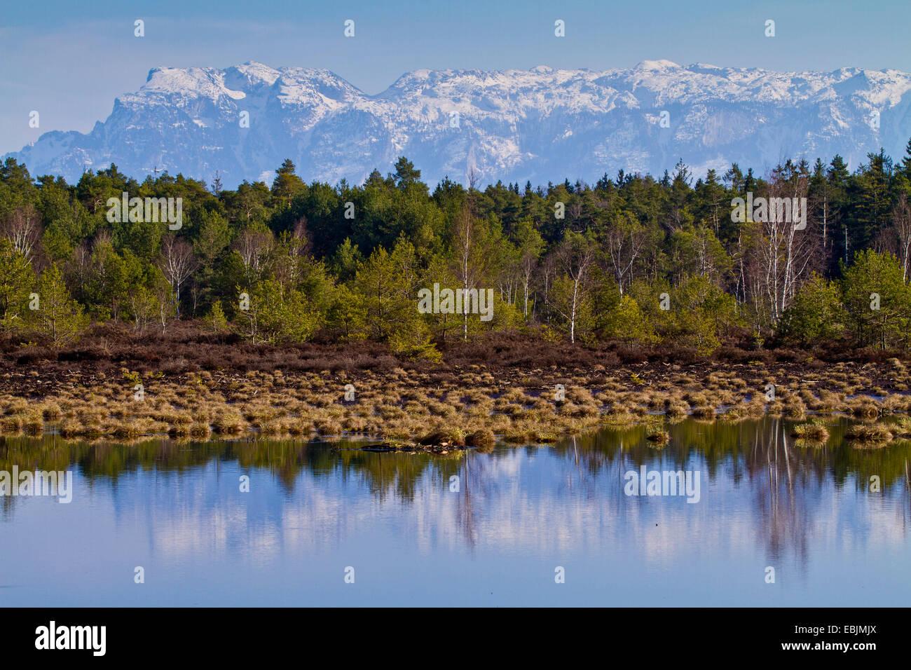 Renaturated moor et les Alpes en arrière-plan, l'Allemagne, la Bavière Photo Stock