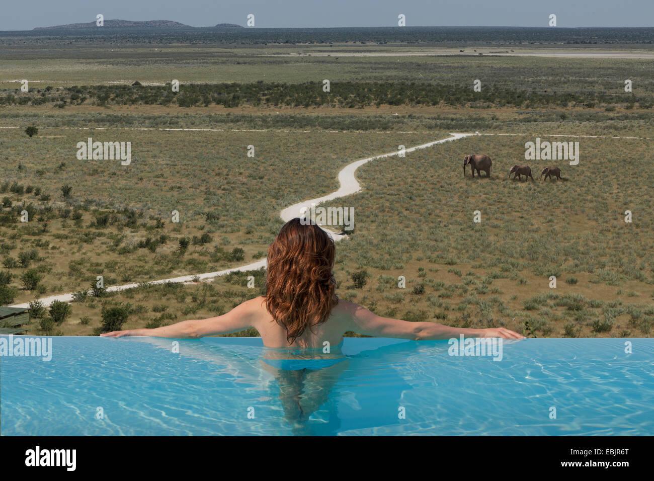 Femme regardant des éléphants de piscine à débordement à la dolomite camp, Etosha National Photo Stock