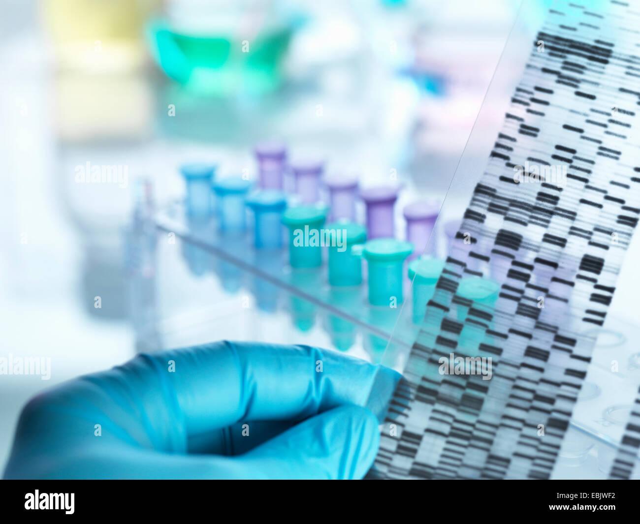 Scientist holding en face de gel d'ADN des échantillons pour faire des essais en laboratoire Photo Stock
