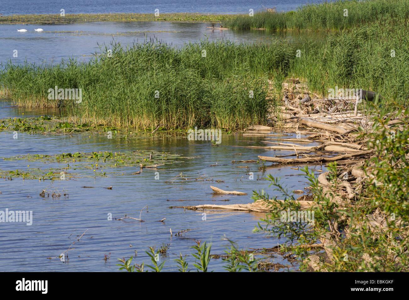 Lakeside avec du bois flotté et Reed, l'Allemagne, la Bavière, le lac de Chiemsee Photo Stock