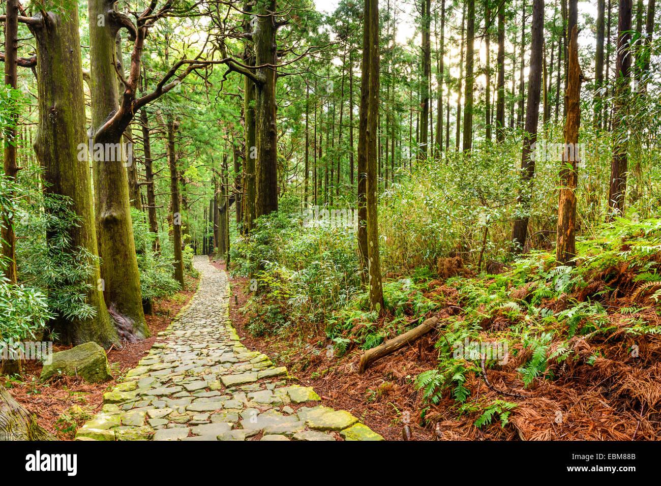 Kumano Kodo à Daimon-zaka, un sentier sacré désigné comme site du patrimoine mondial de l'UNESCO dans la région de Nachi, Wakayama, Japon. Banque D'Images