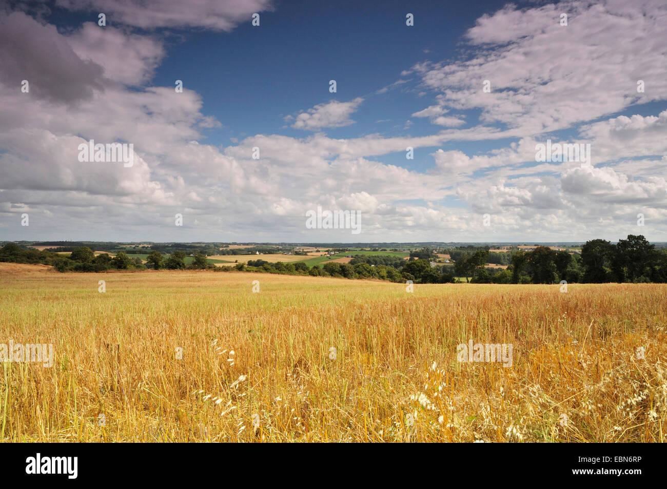 Vaste paysage vallonné avec champ champ de chaumes en été, France, Bretagne, Plevenon Photo Stock