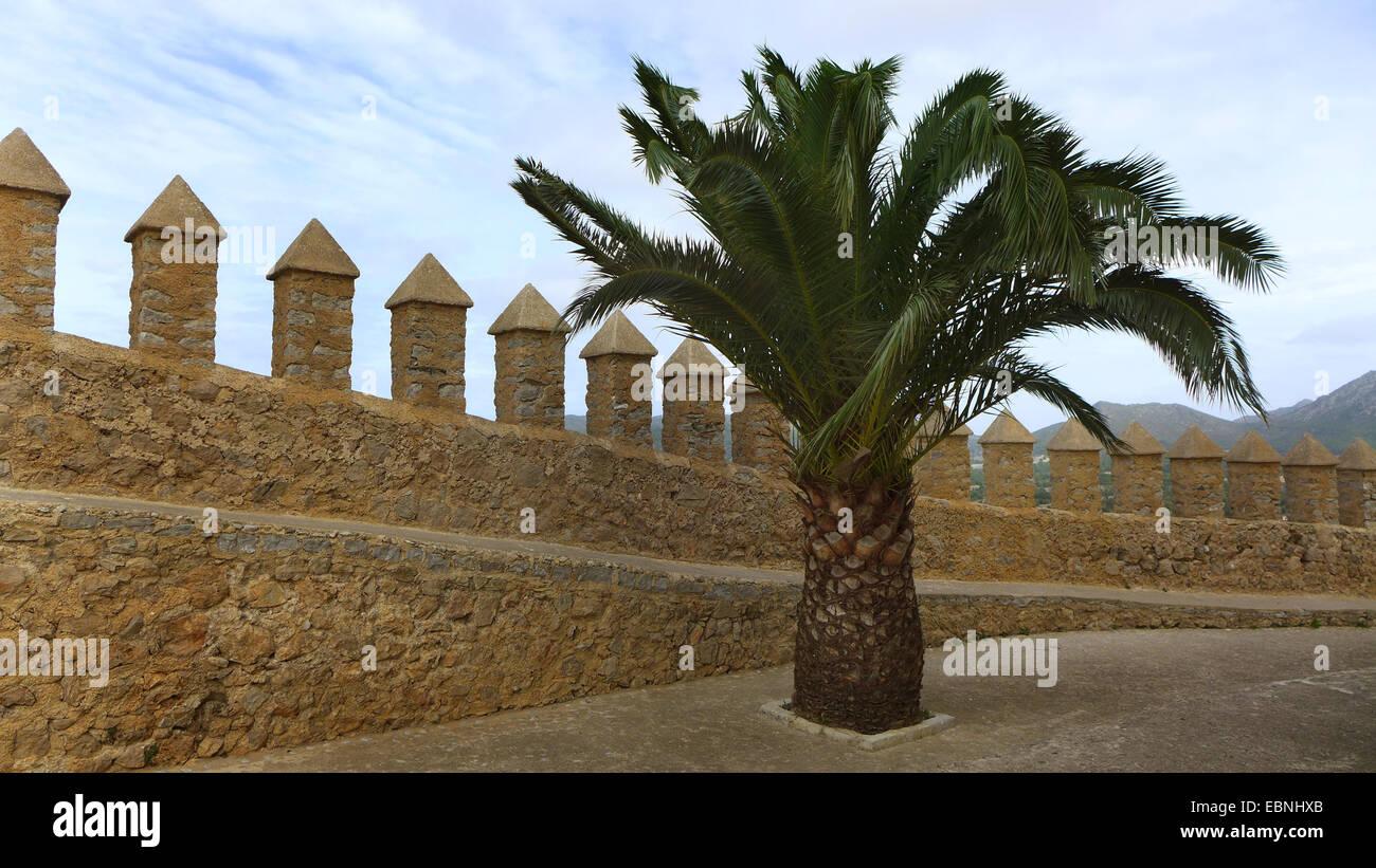 Île des Canaries (Phoenix canariensis), mur de forteresse de Artß, Espagne, Baléares, Majorque, Arta Banque D'Images