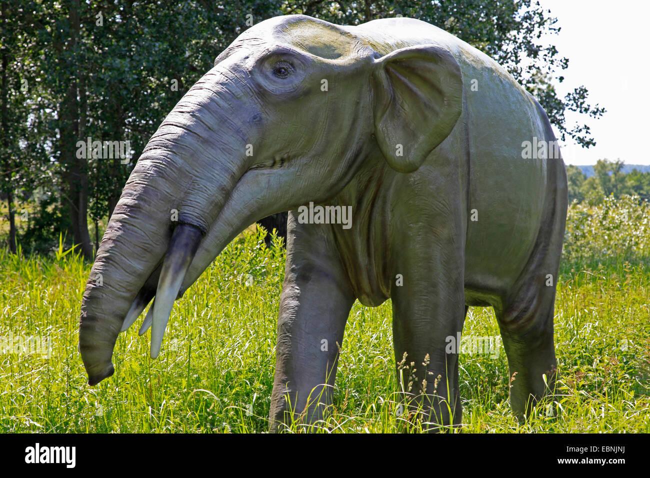 Gomphotherium (Gomphotherium), l'éléphant disparu primitiv Banque D'Images