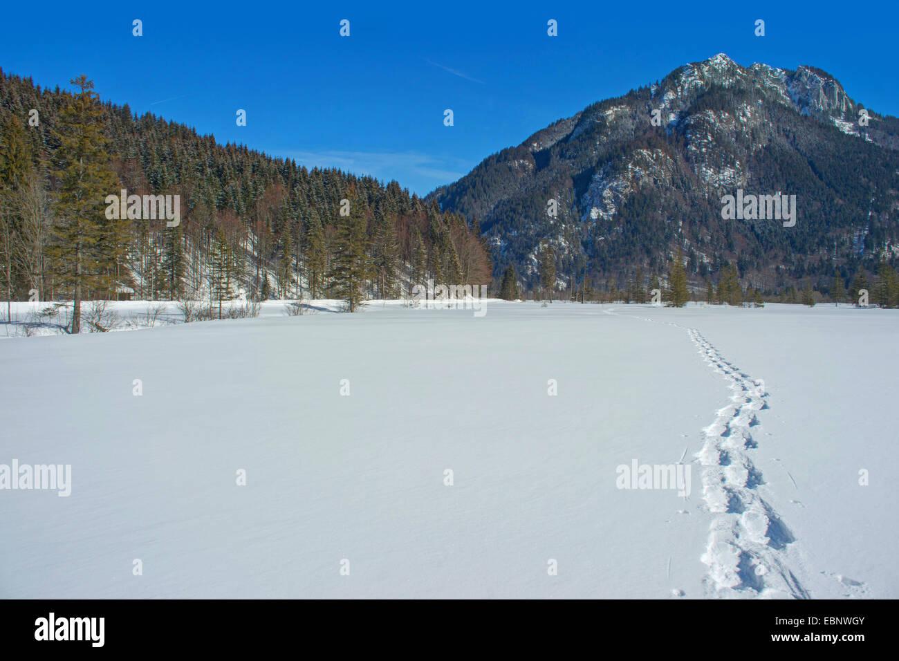Pistes de raquette dans un paysage hivernal, Alpes Ammergau avec roscoff en arrière-plan, l'Allemagne, Photo Stock