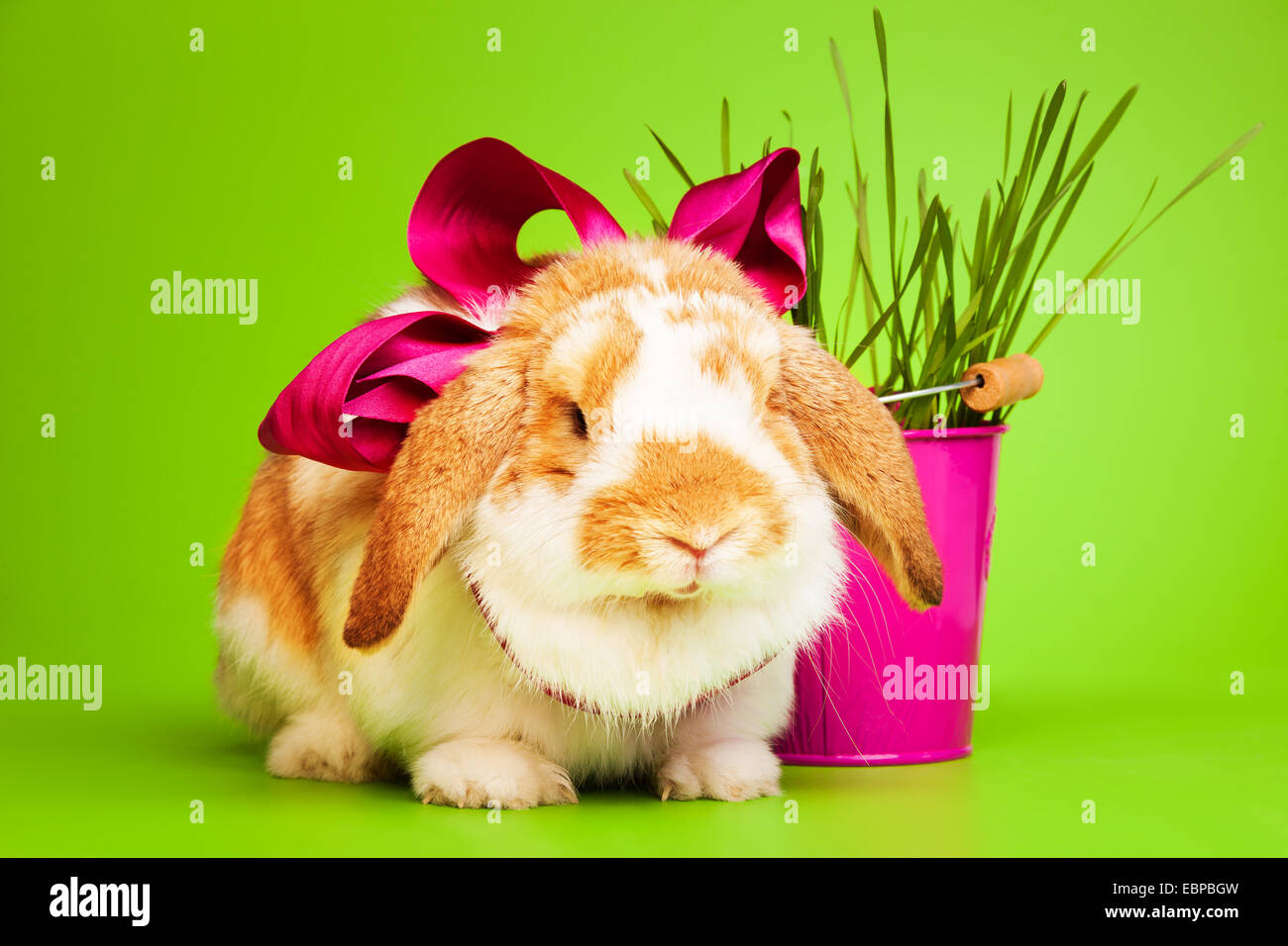 Mignon petit lapin avec noeud sur fond vert Photo Stock