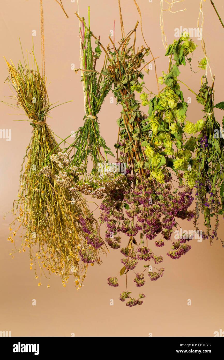 Bouquet garni accroché pour sécher Photo Stock