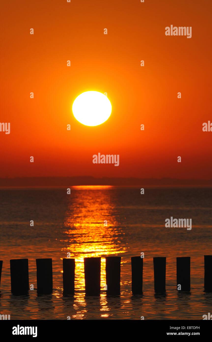 Épi dans le coucher du soleil, de l'Allemagne, Mecklembourg-Poméranie-Occidentale Banque D'Images