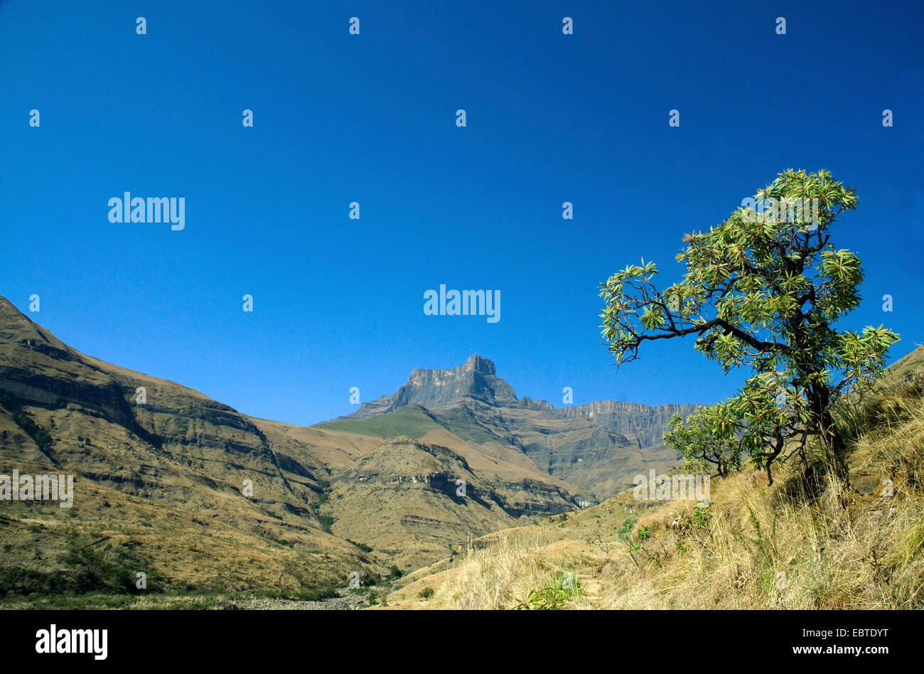Montagnes du Drakensberg, Afrique du Sud, Cape Town Photo Stock