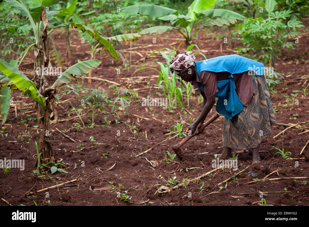 Femme d'agriculture travaille sur son domaine à l'aide d'une hachette, d'Ouganda, Jinja Photo Stock