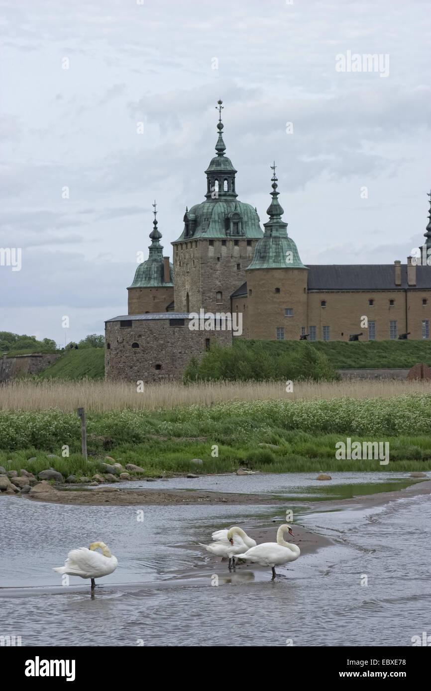 Mute swan (Cygnus olor), Château de Kalmar, Kalmar, Suède Banque D'Images
