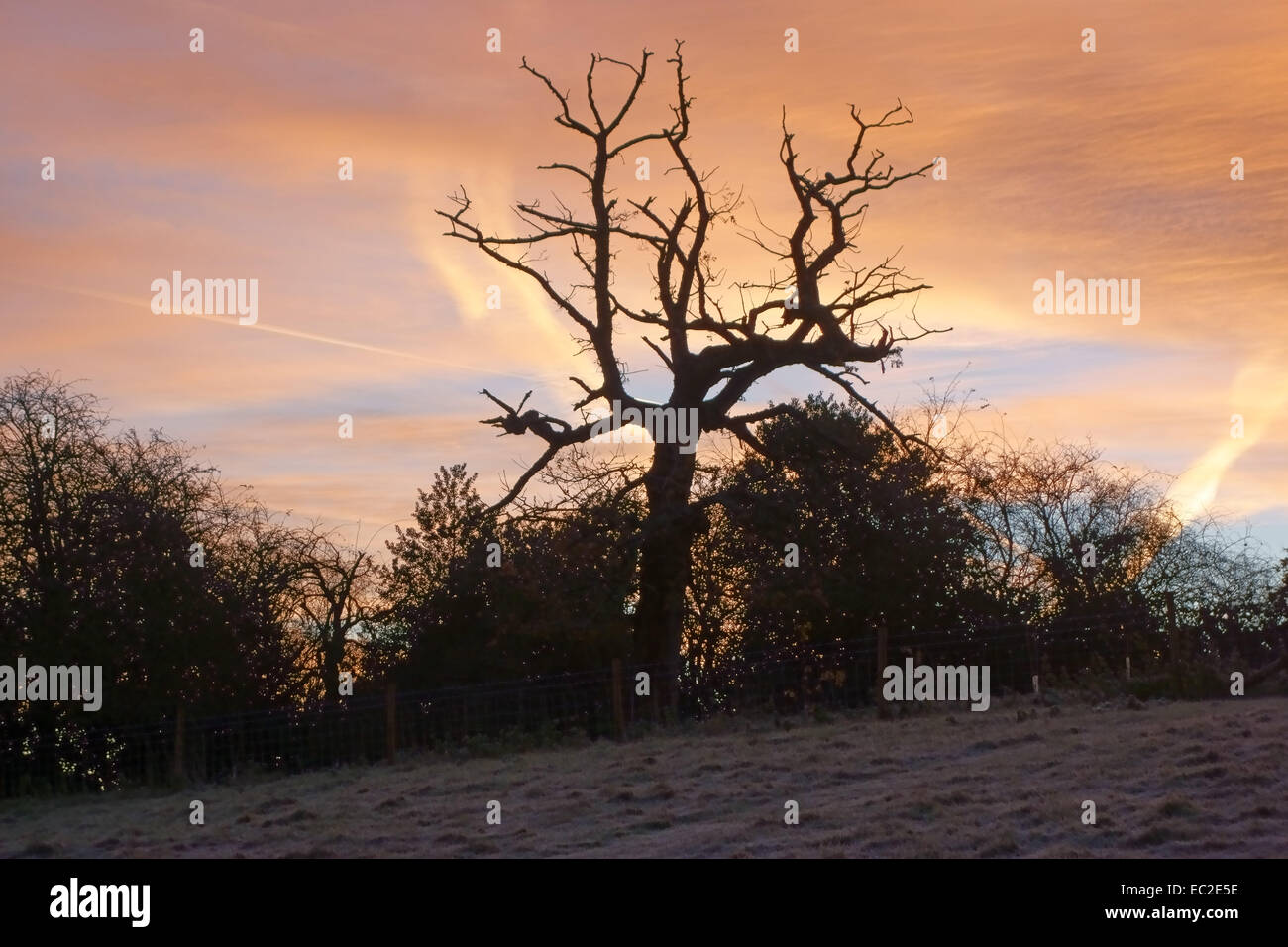 Lever du soleil d'hiver sur un matin glacial avec hedegeline nues des arbres et d'un chêne mort ensemble Photo Stock