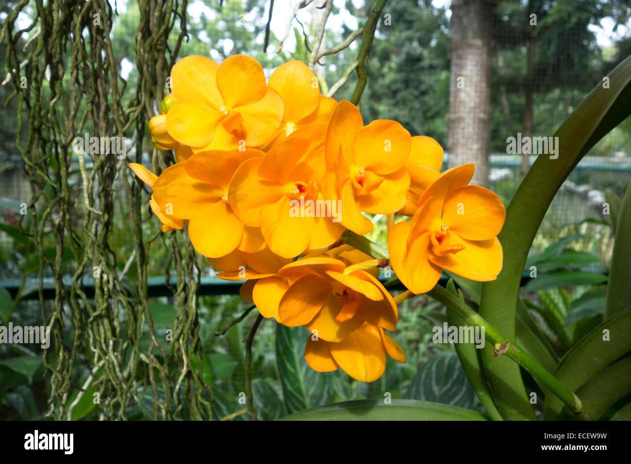 Rare D Orchidees Tropicales Exotiques Fleurs Orange Banque D Images