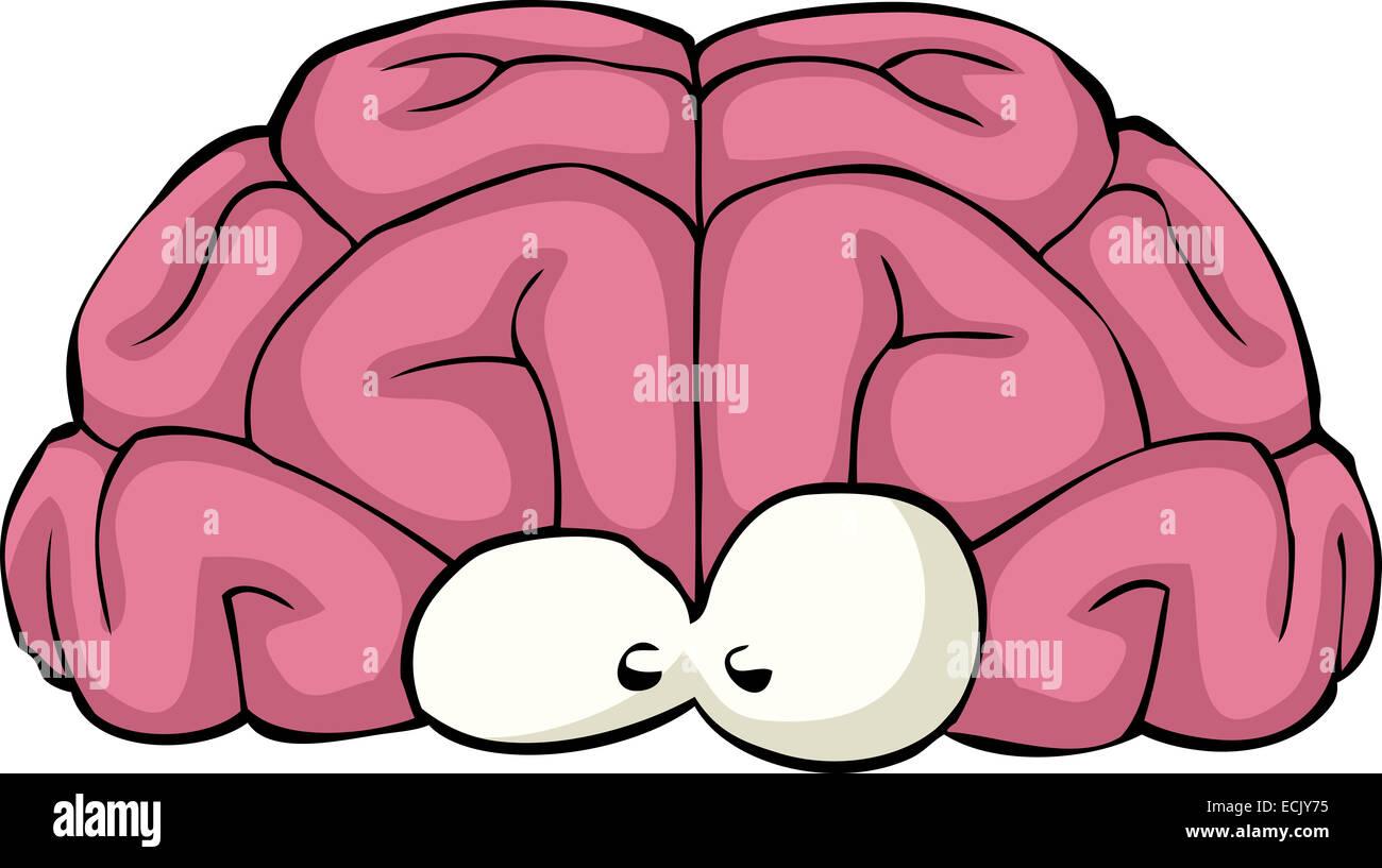 Cerveau sur un fond blanc Photo Stock