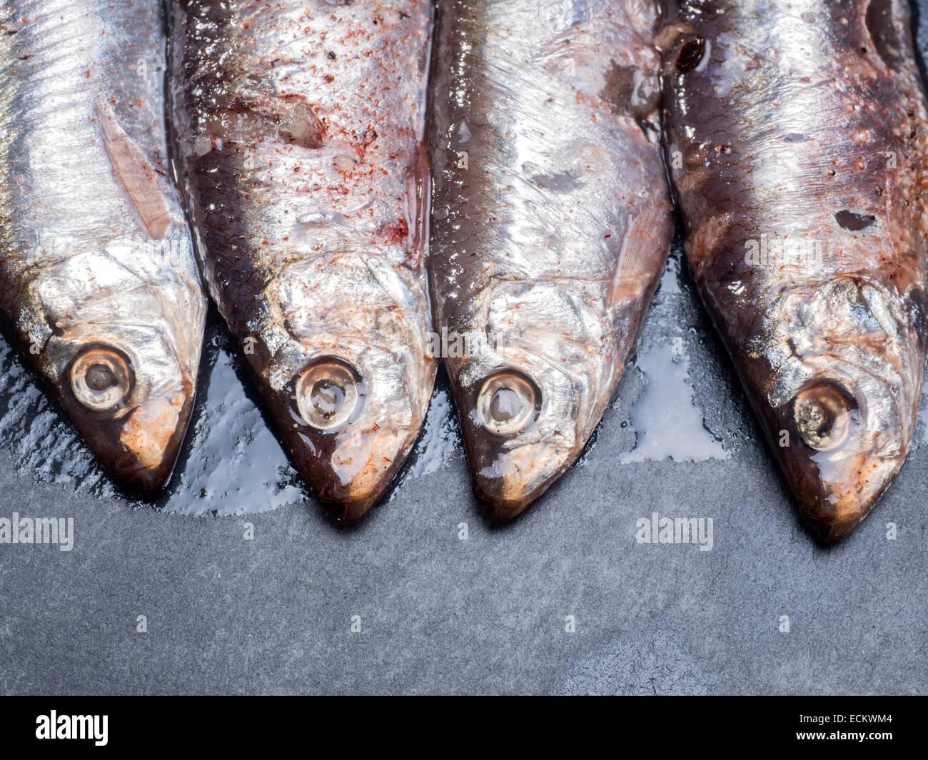 Sardines anchois tous prêts à manger Photo Stock