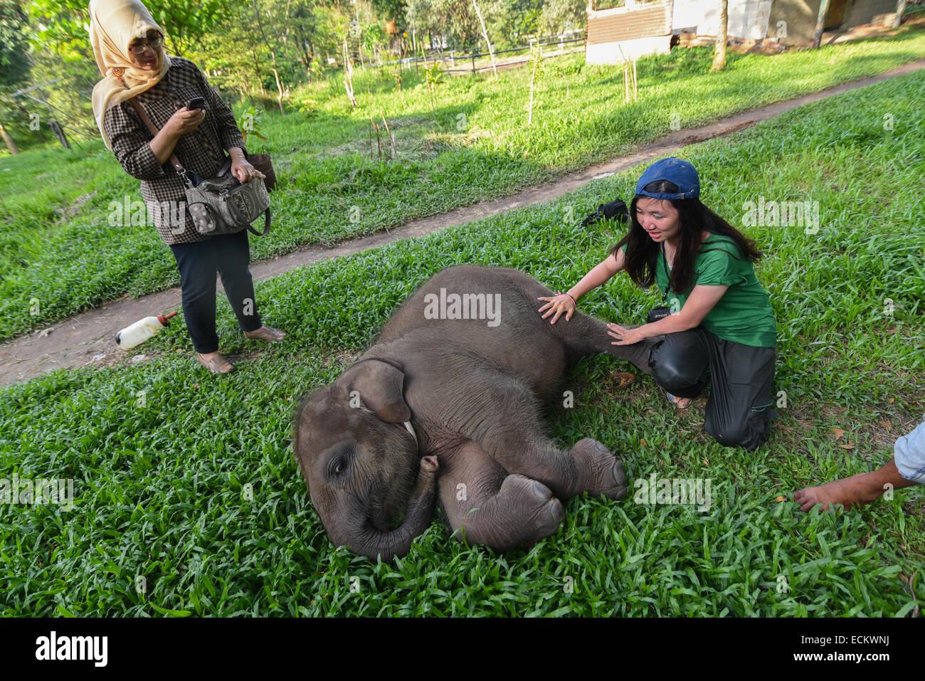 Conservation Volunteers en prenant soin d'un bébé éléphant de Sumatra nommé Yeti dans le Parc National de Way Kambas, Banque D'Images