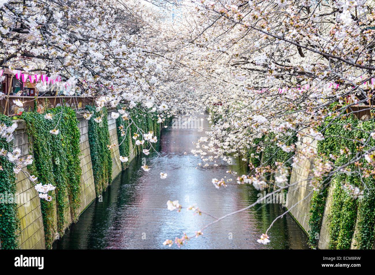 Tokyo, Japon à Meguro canal dans le printemps. Photo Stock
