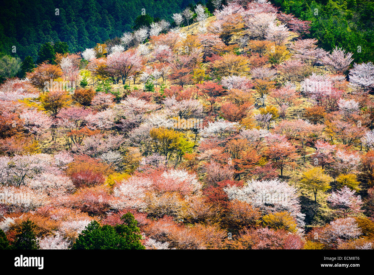 Yoshinoyama, Nara, Japon, Paysage de printemps. Photo Stock