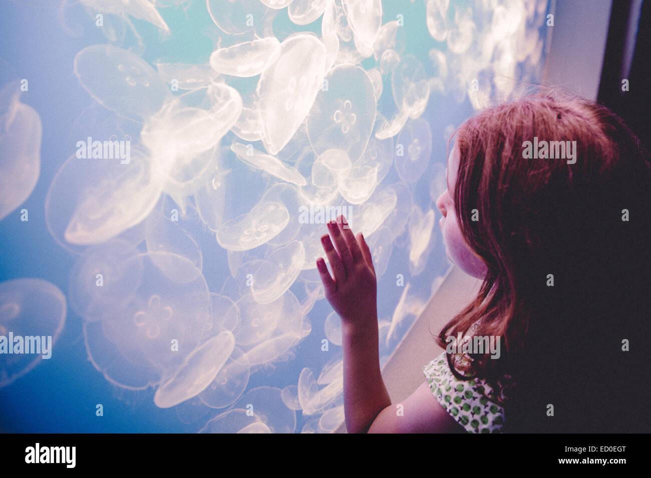 Girl (6-7) regarder méduse dans l'aquarium Photo Stock