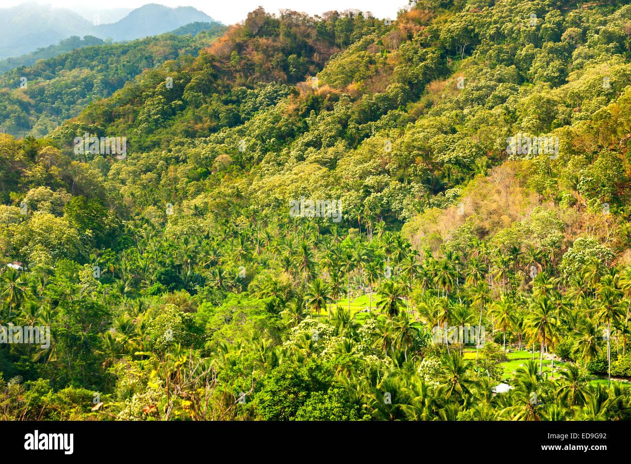 Paysage paysage entre les villes de Maumere Moni et sur l'île de Flores, en Indonésie. Photo Stock