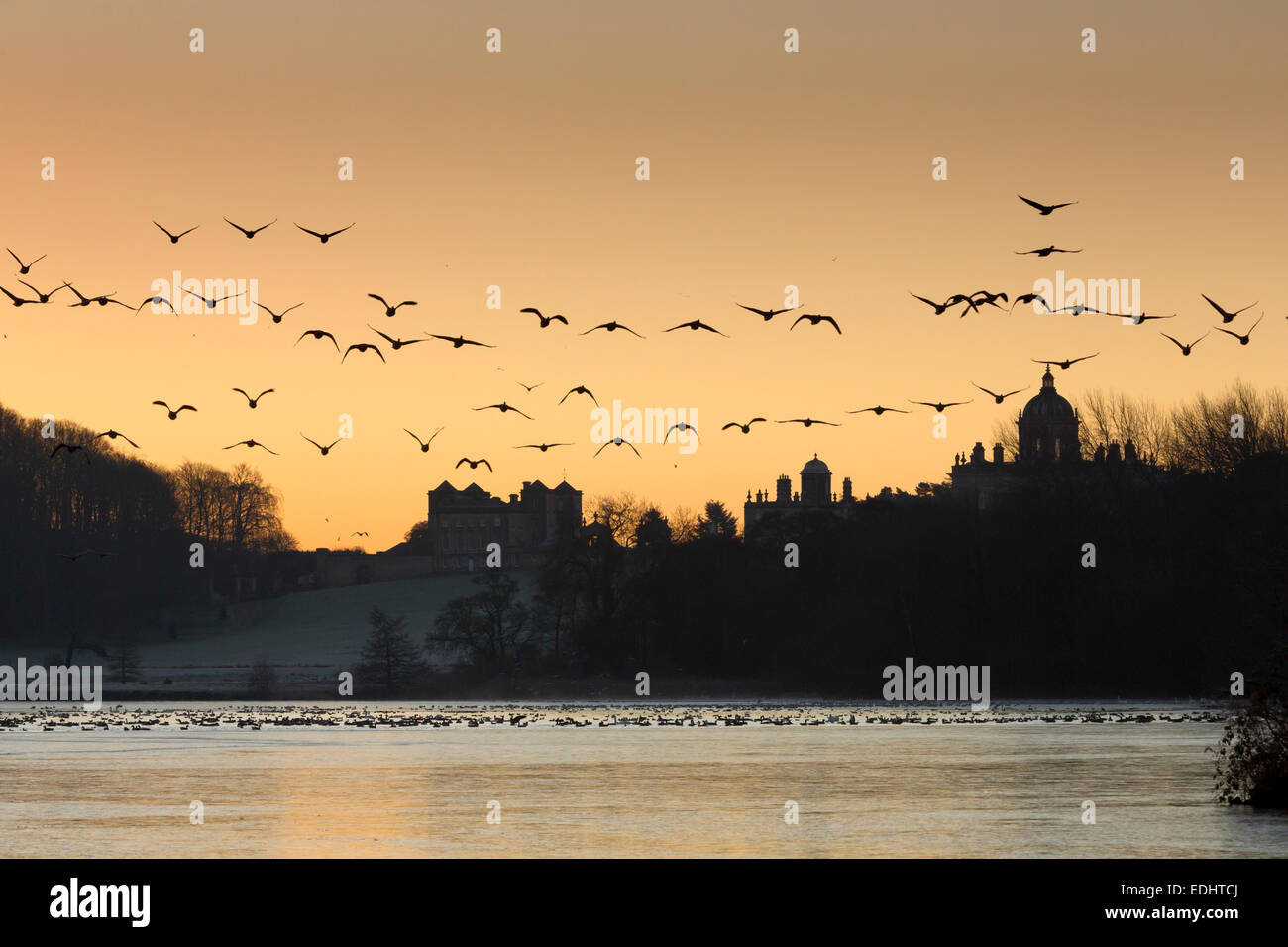 Vol d'oies sur le Grand Lac, le château Howard à la mi-hiver, North Yorkshire, Angleterre. Photo Stock