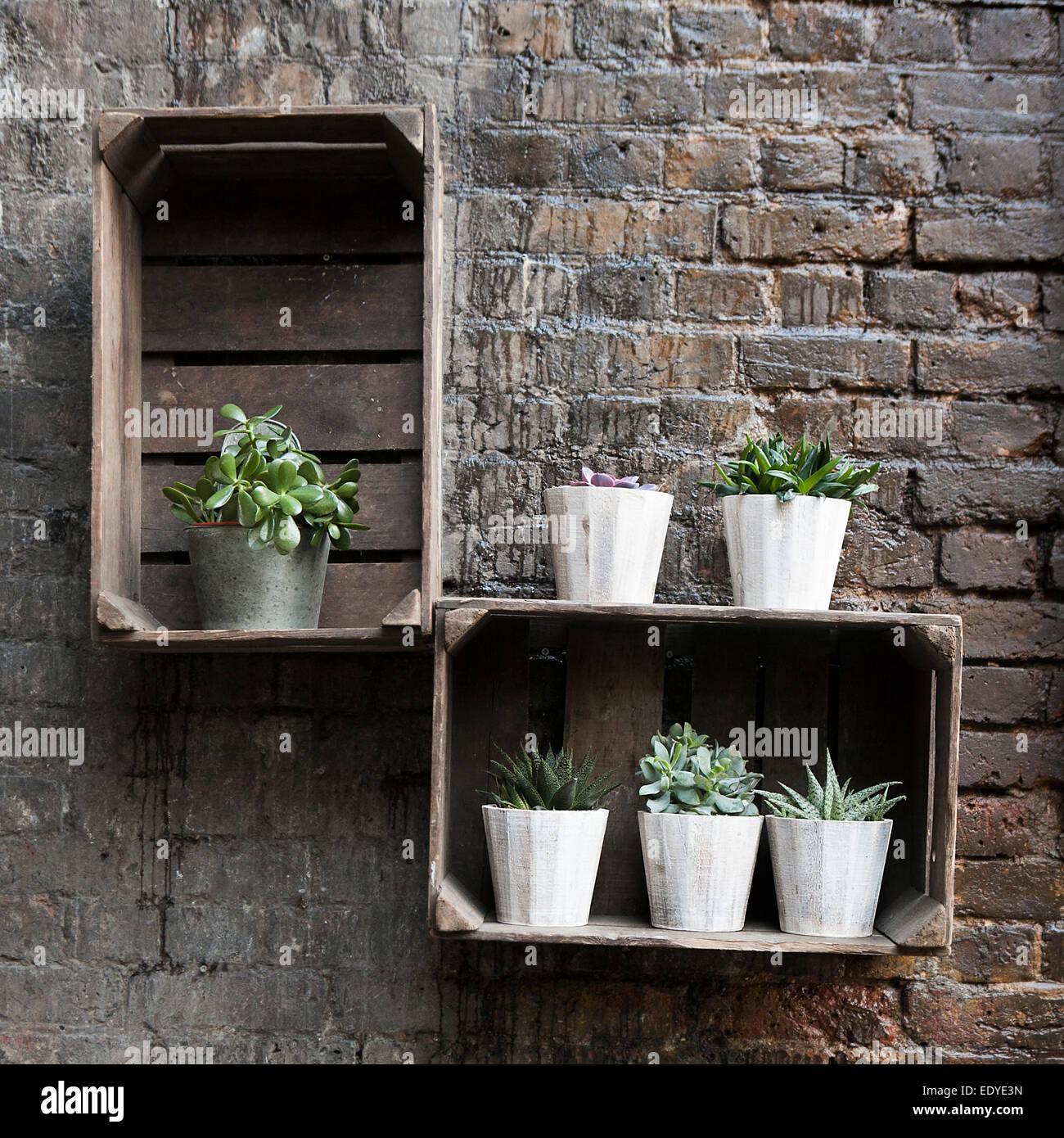 Decoration Avec Plantes Grasses plantes grasses dans les pots comme décoration du mur de