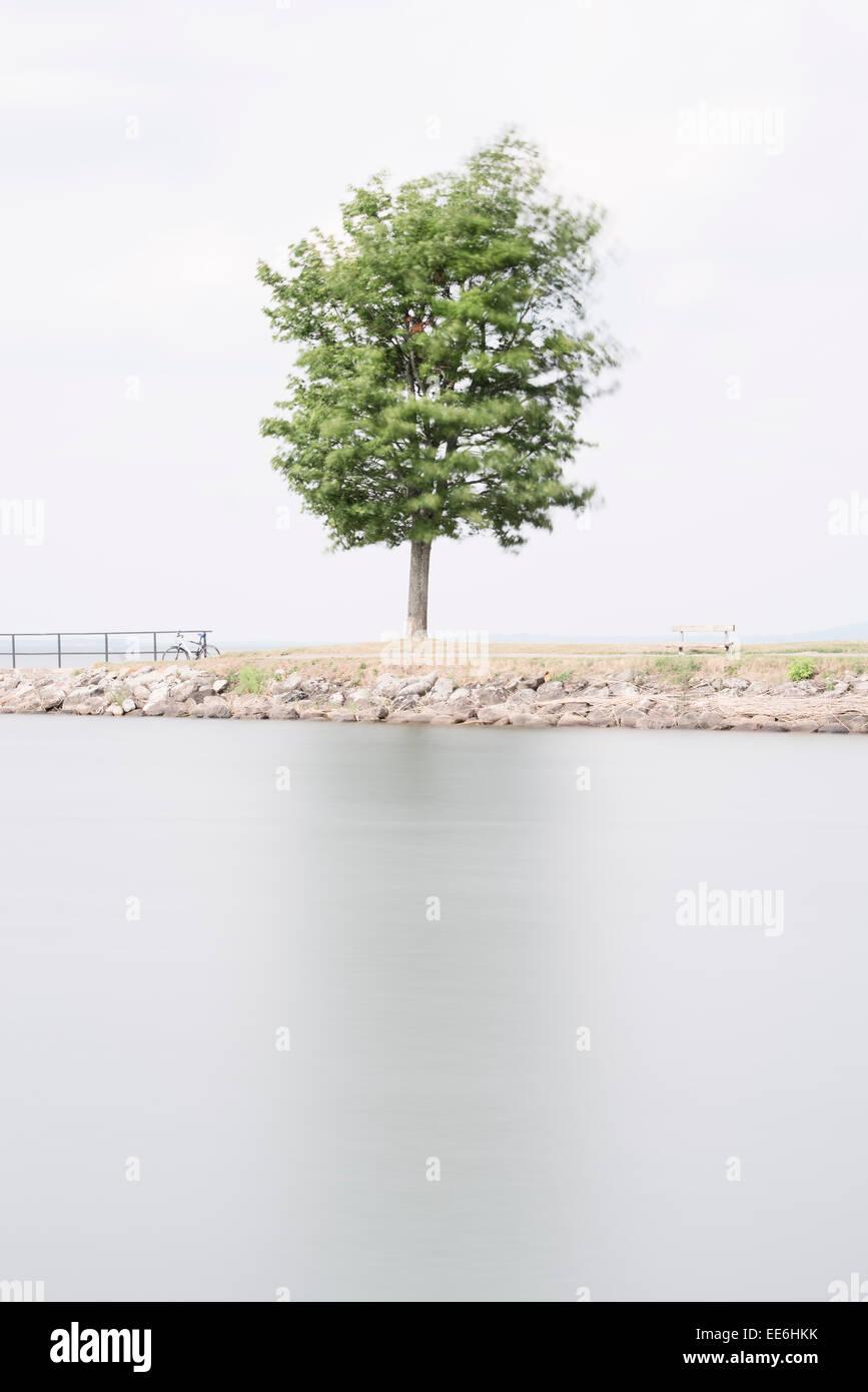 Un arbre par lac. Scène de la nature paisible en zone rurale, la Suède. Photo Stock