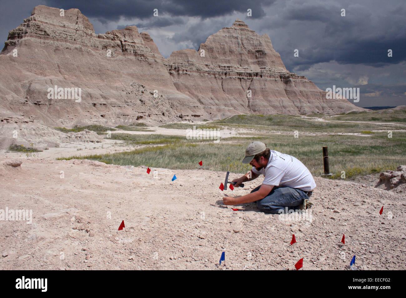 Un paléontologue travaillant sur un dig de fossiles au site sabre dans Badlands National Park dans le Dakota Photo Stock