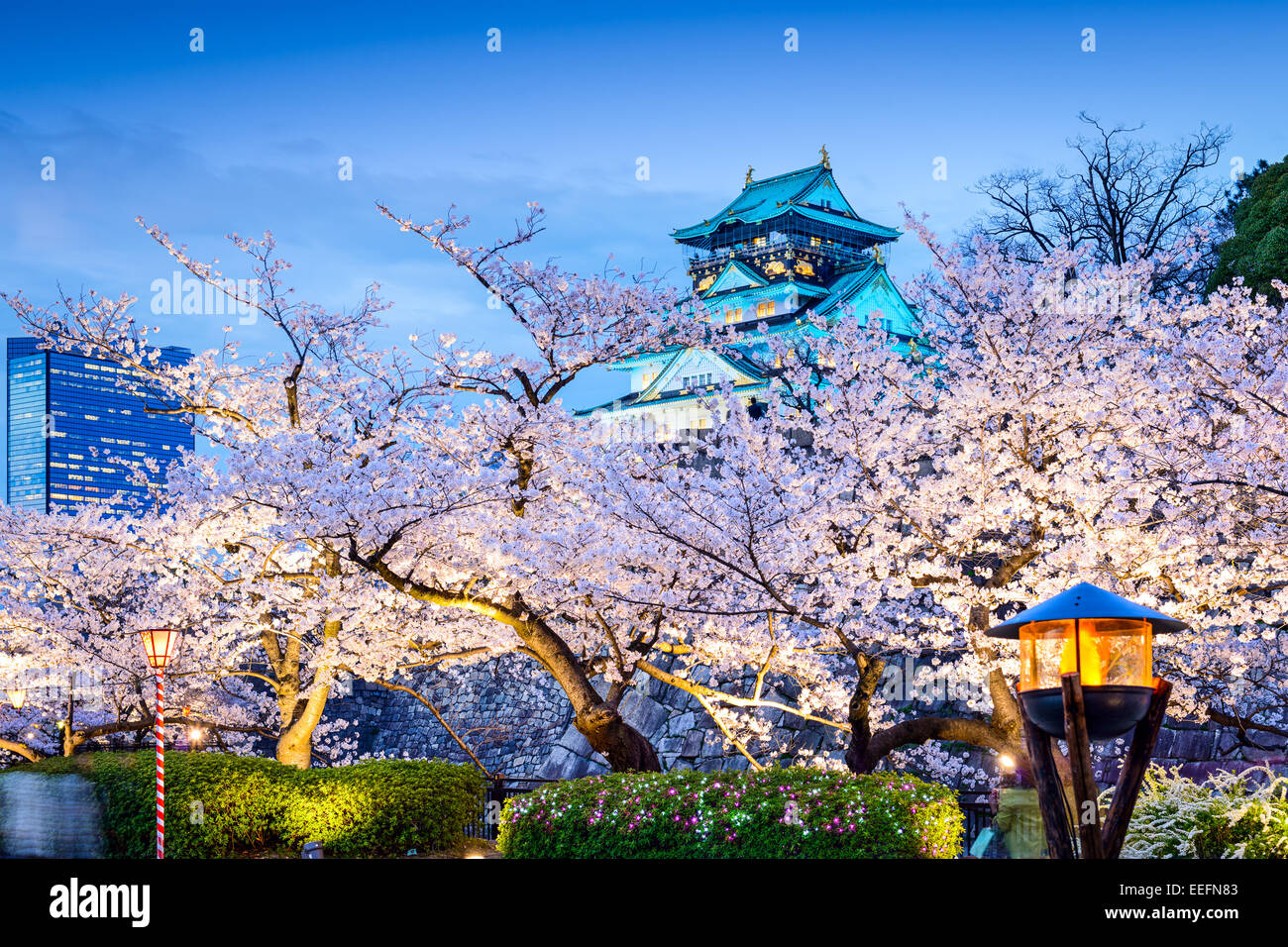 Osaka, Japon sakura au château d'Osaka. Photo Stock