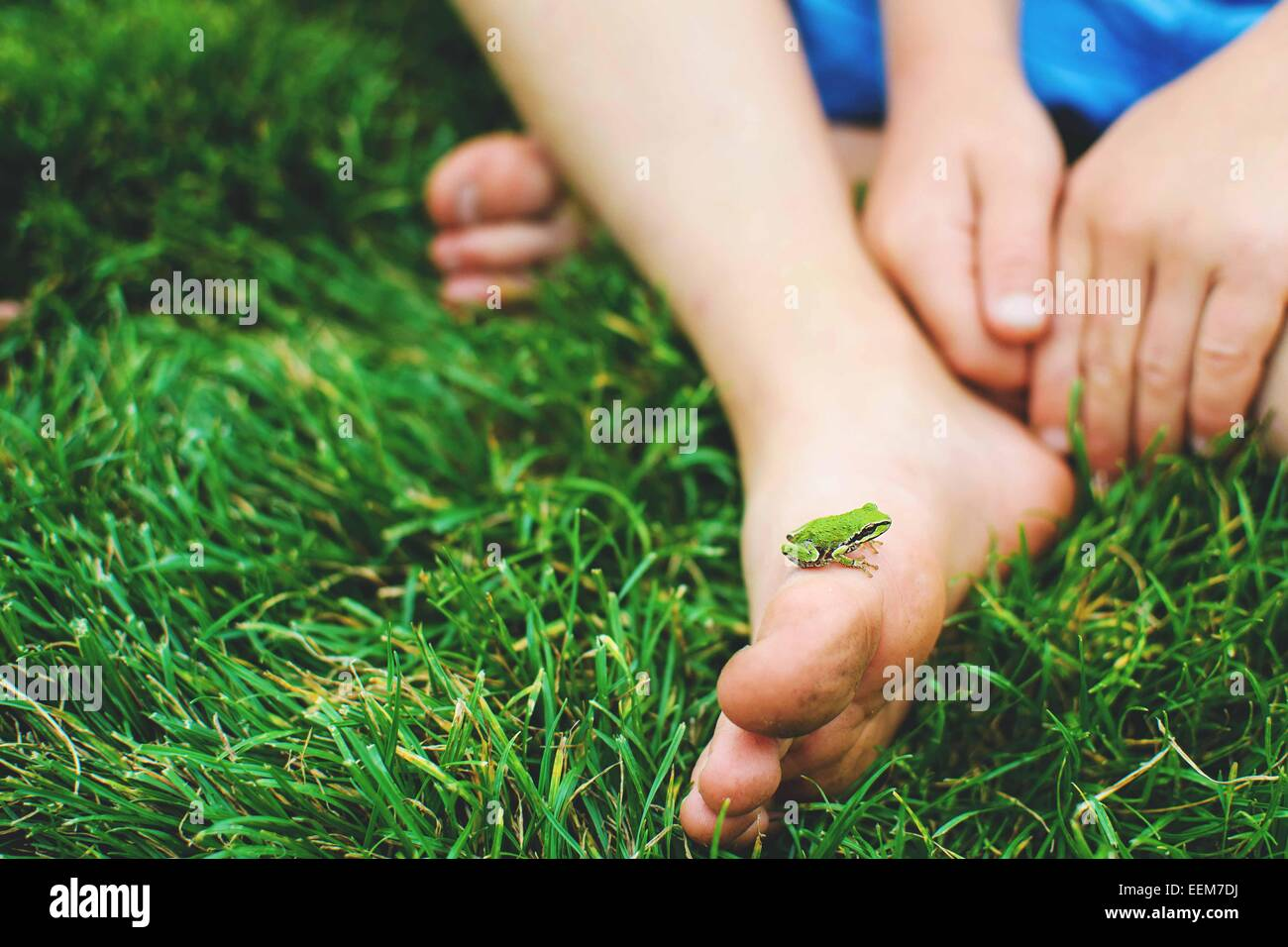 Petite grenouille sur l'enfant (4-5) foot Photo Stock