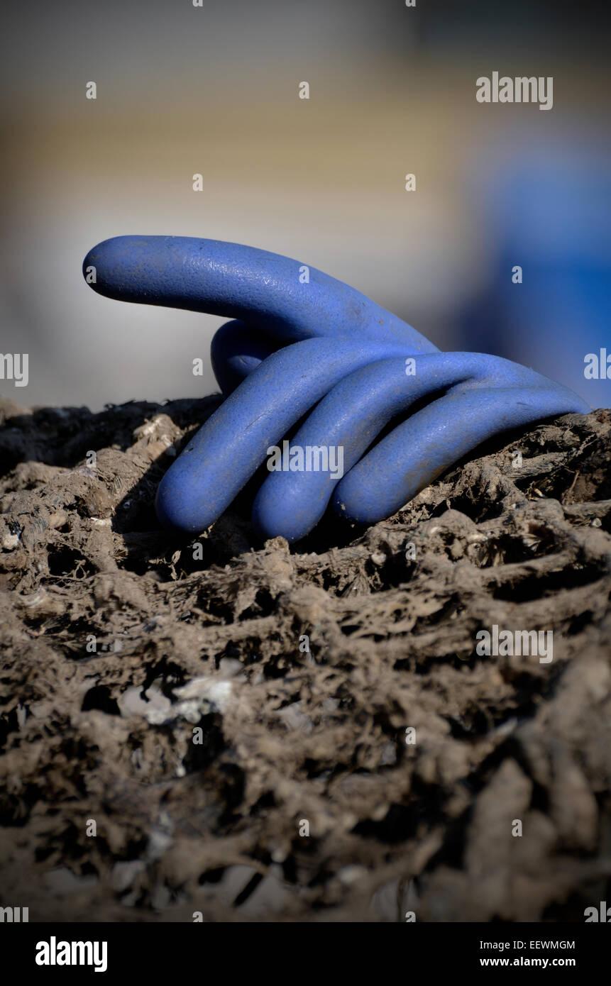 Gant en caoutchouc bleu Photo Stock