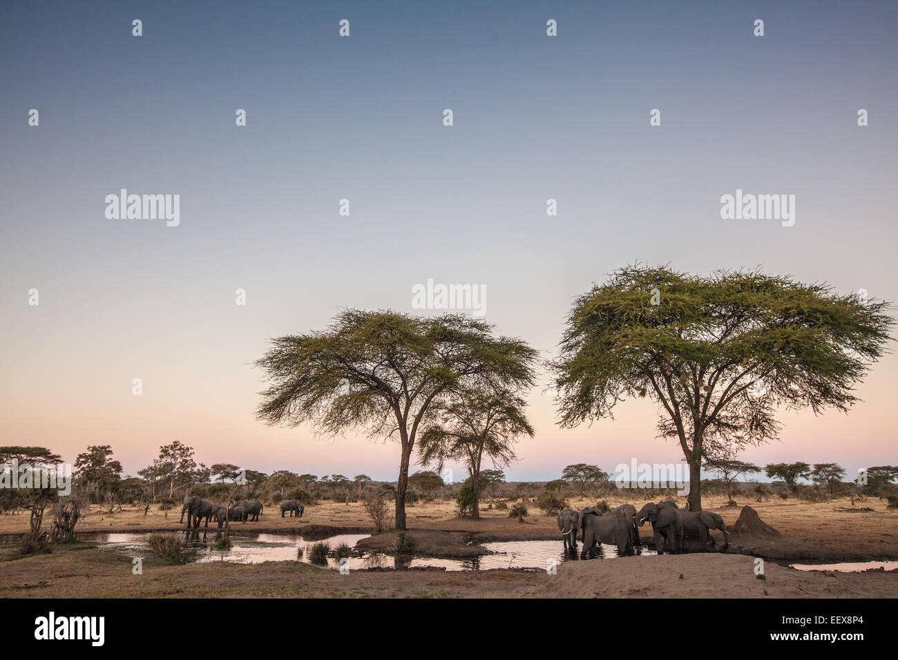 L'éléphant d'Afrique Photo Stock