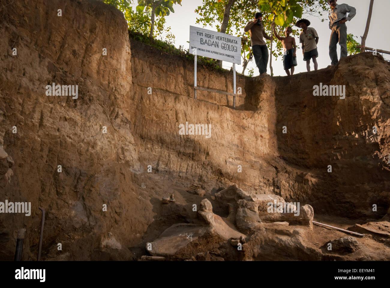 Site de fouilles anciennes fossiles d'éléphants Elephas hysudrindicus à Blora, Central Java. Photo Stock