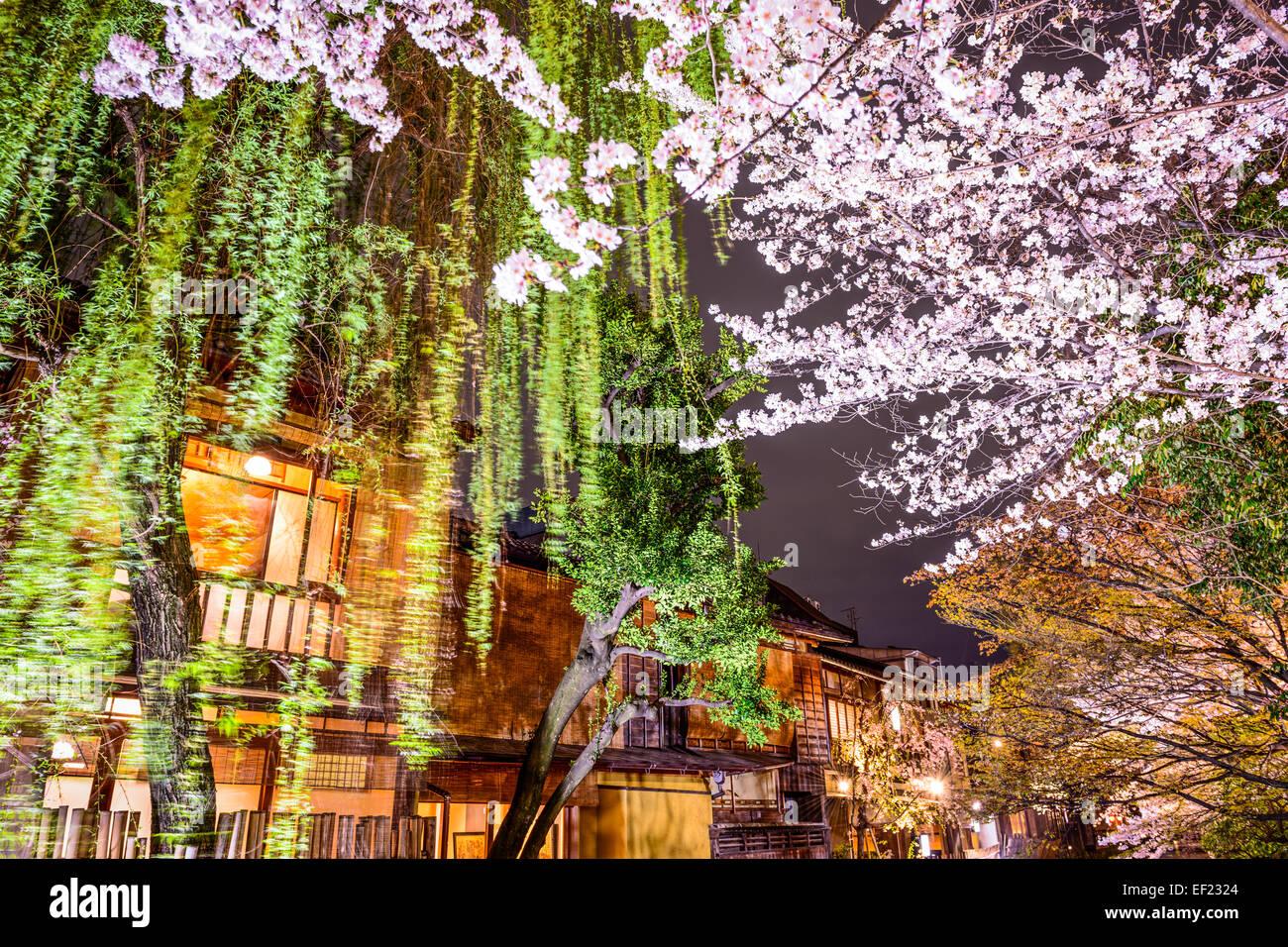 Feuillage de printemps à Kyoto, au Japon, dans la nuit. Photo Stock