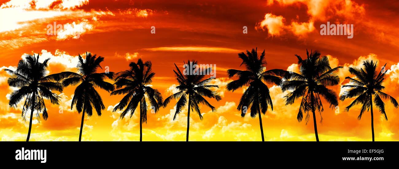Silhouettes de palmiers noir sur Ciel de coucher du soleil. Photo Stock