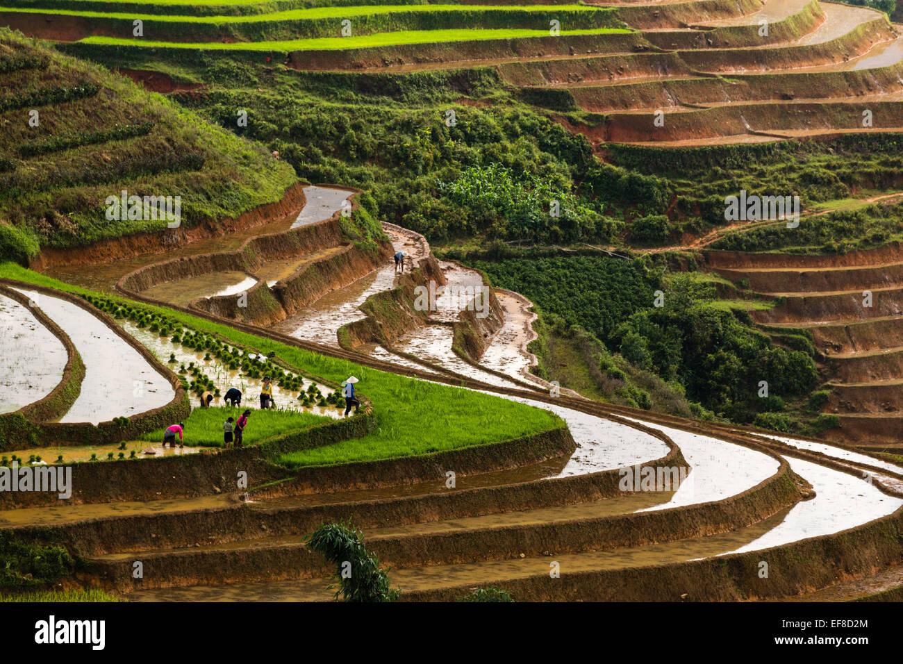 Paysans cultivant le riz en terrasse pendant la saison des pluies près de Sa Pa à Lao Cai Road, dans le Photo Stock