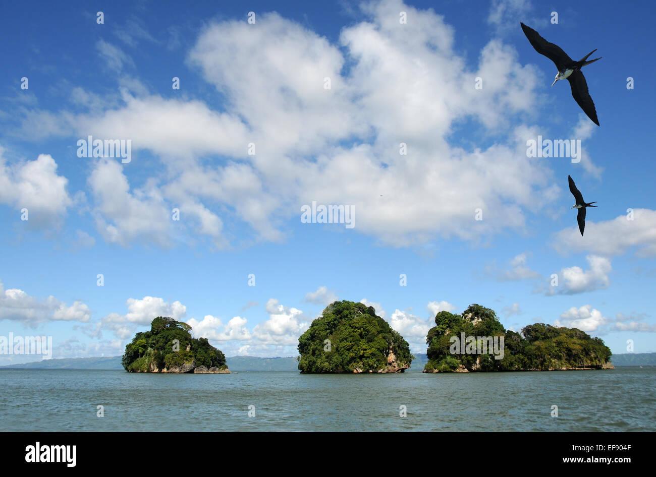 République Dominicaine exotique peuplée par les oiseaux des îles Photo Stock