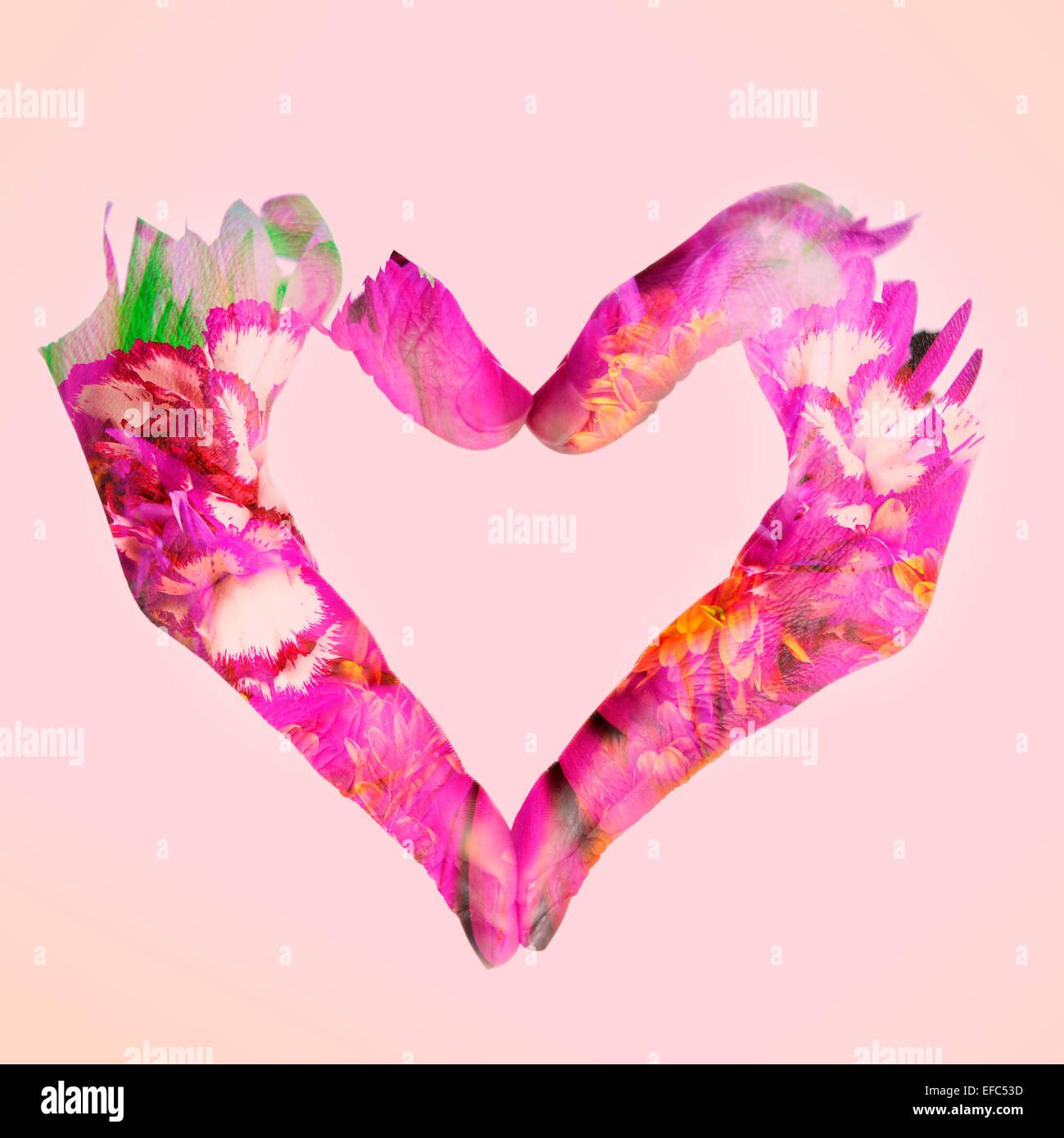 Double exposition de femme mains formant un cœur et des fleurs, sur un fond rose Photo Stock