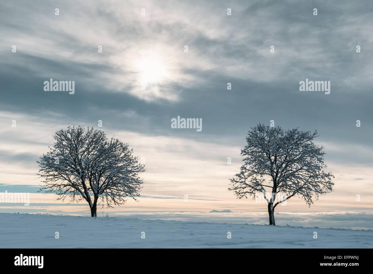 Les arbres dénudés en hiver, Bade-Wurtemberg, Allemagne Photo Stock