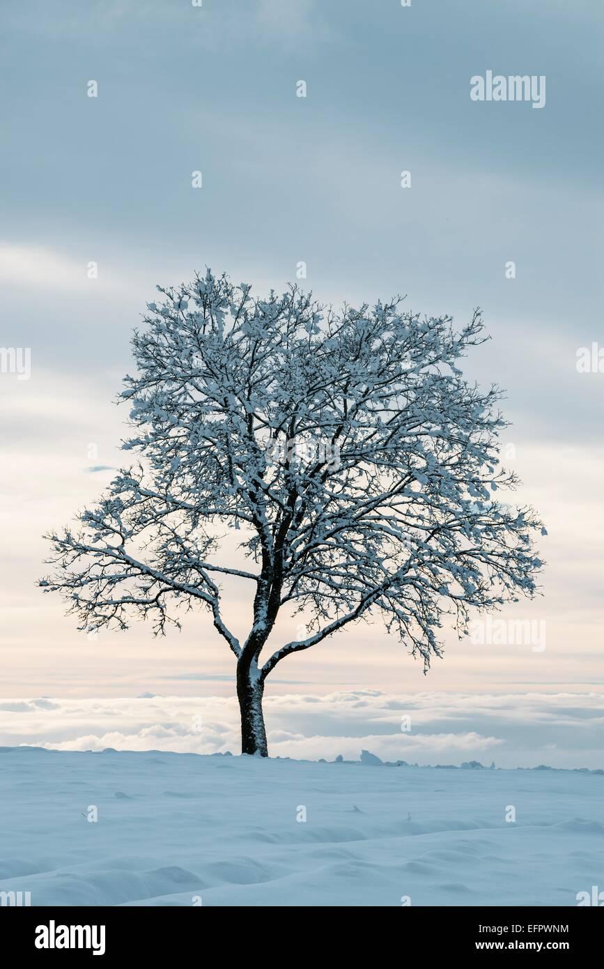 Arbre nu en hiver, Bade-Wurtemberg, Allemagne Photo Stock