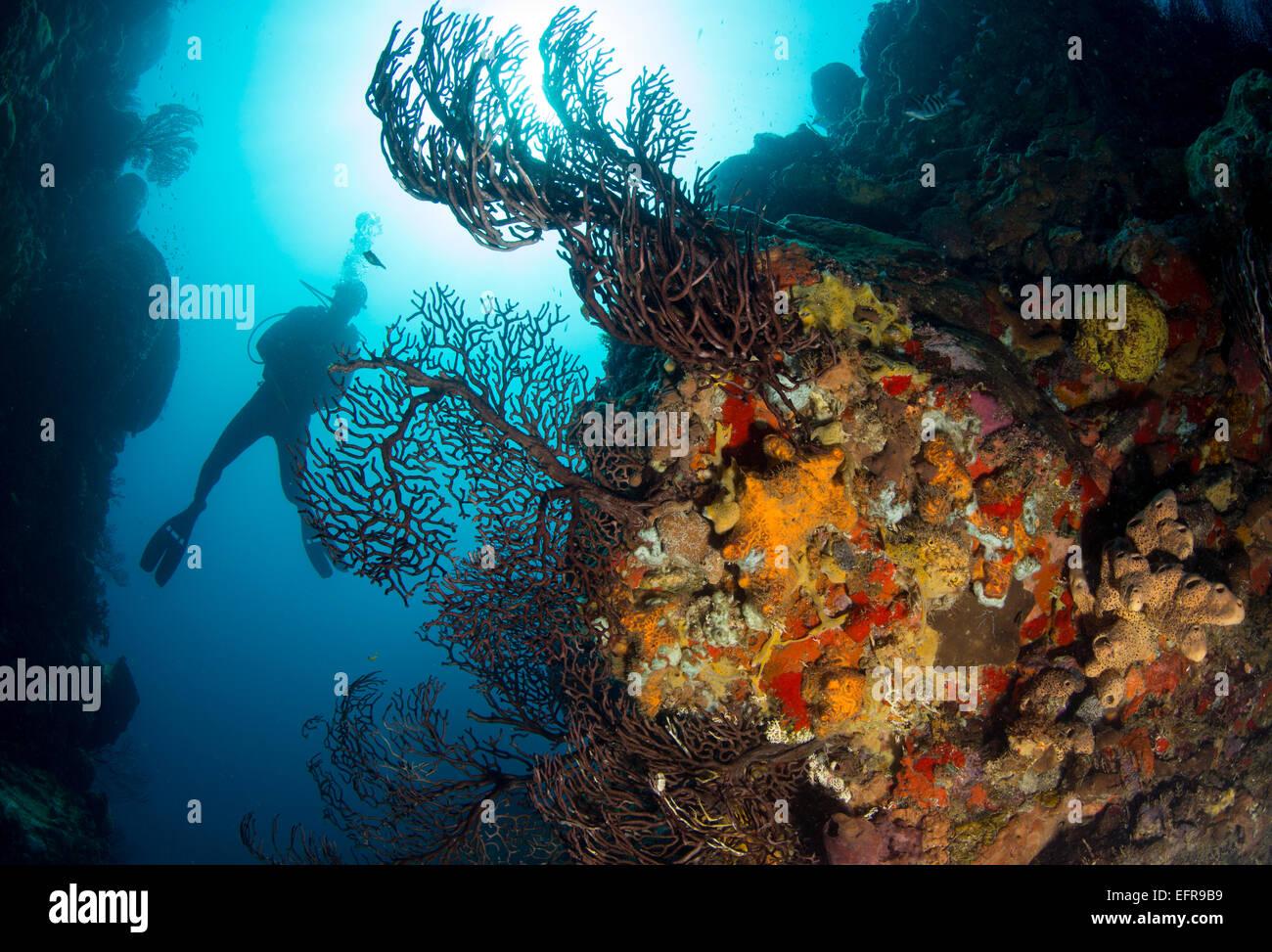 Diver sur barrière de corail. Photo Stock