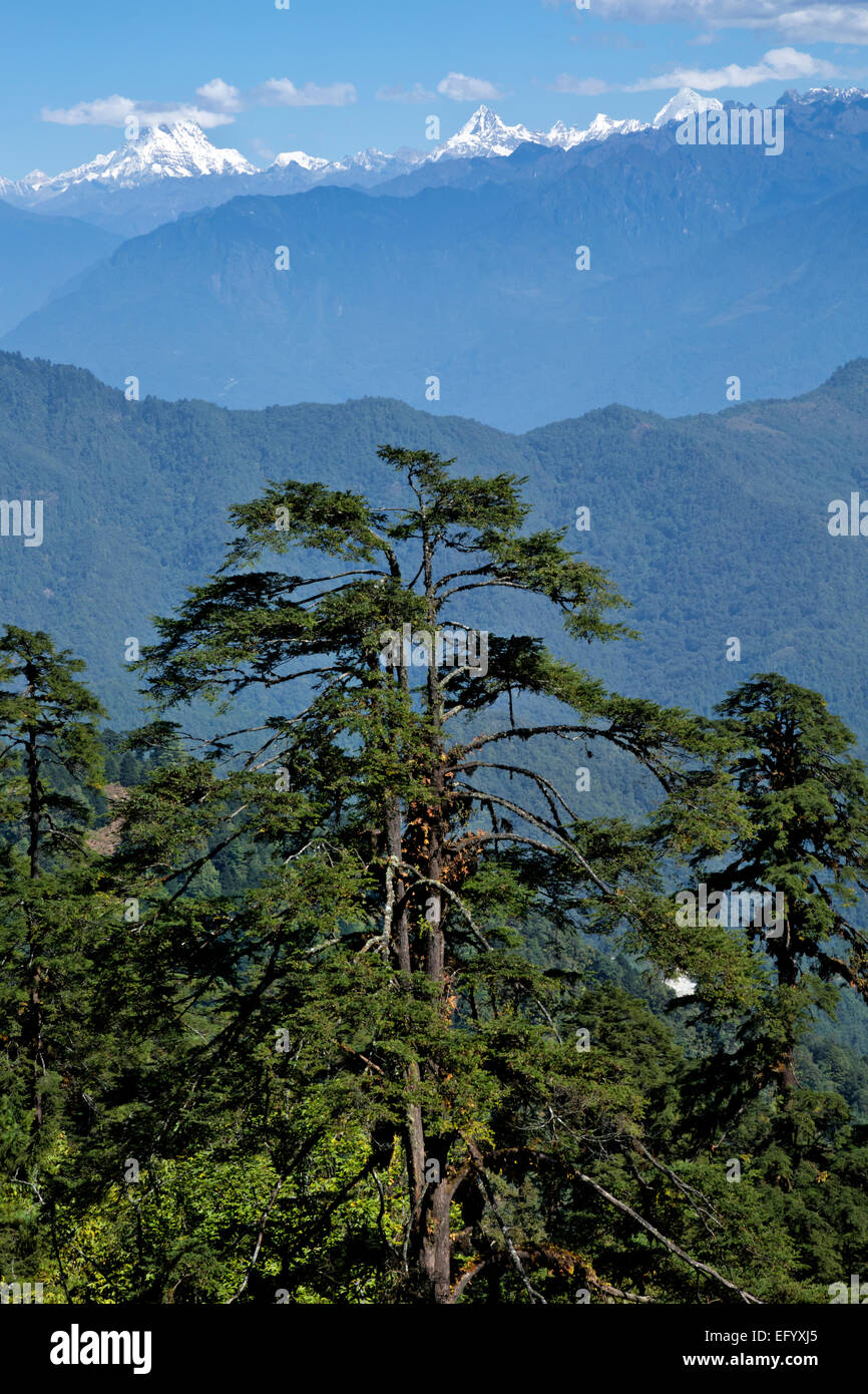 BU00104-00...BHOUTAN - Vue de l'Himalaya Bhoutanais de Dochhu La (col). Photo Stock